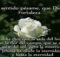 Tarjetas gratis de pésame y condolencias