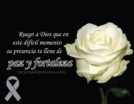 imagen de condolencias con rosa
