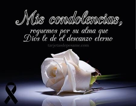 pesame y condolencias con rosa blanca