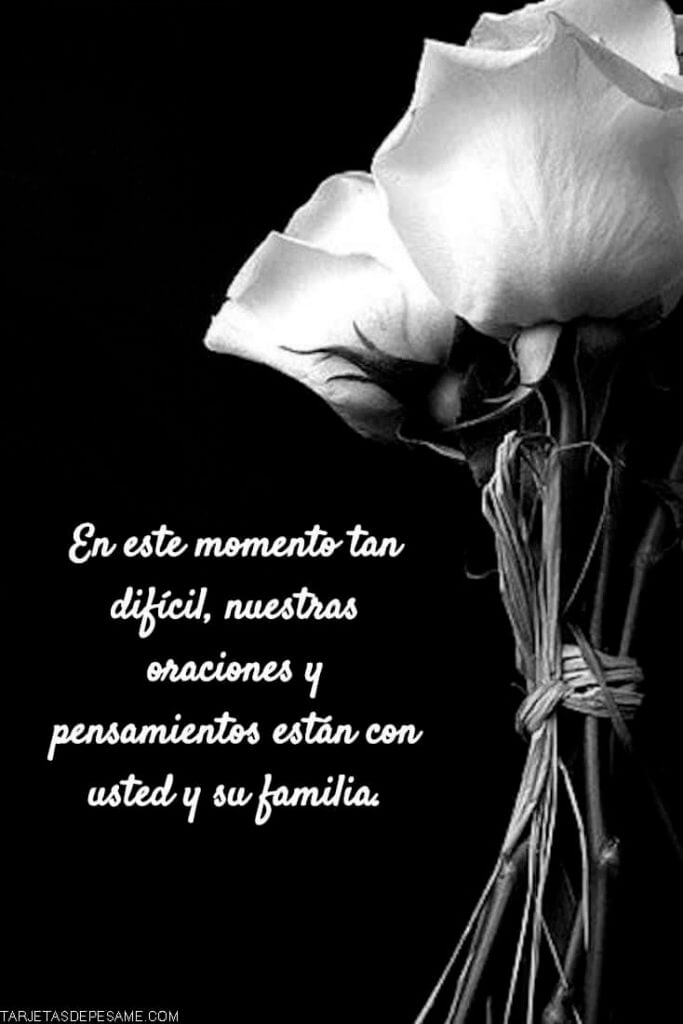 de pesame mensaje con rosas blancas